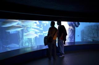 Aquarium tank (Michelle Grant / Time Out)