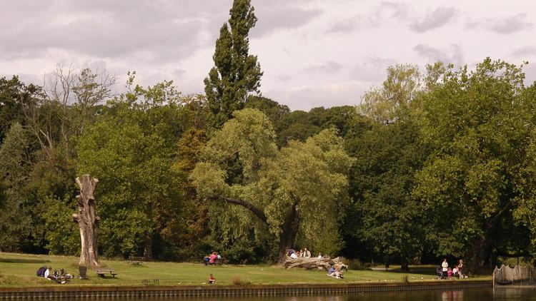 Hampstead Heath Pond