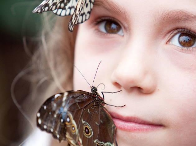 Girl with butterflies (Kevin Webb/NHM Image Resources)