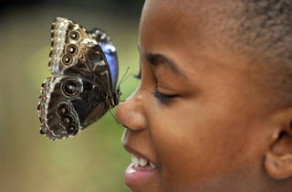 Boy with butterfly (Kevin Webb/NHM Image Resources)