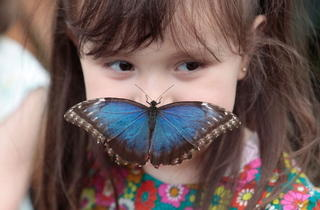 Girl with butterfly (Kevin Webb/NHM Image Resources)
