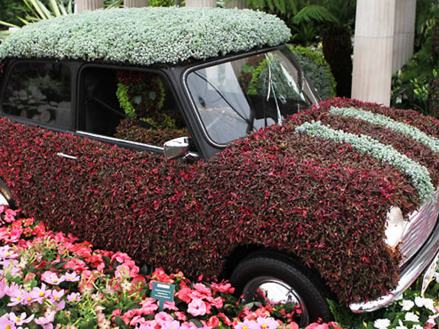 Seven Fl Facts About The Chelsea Flower Show
