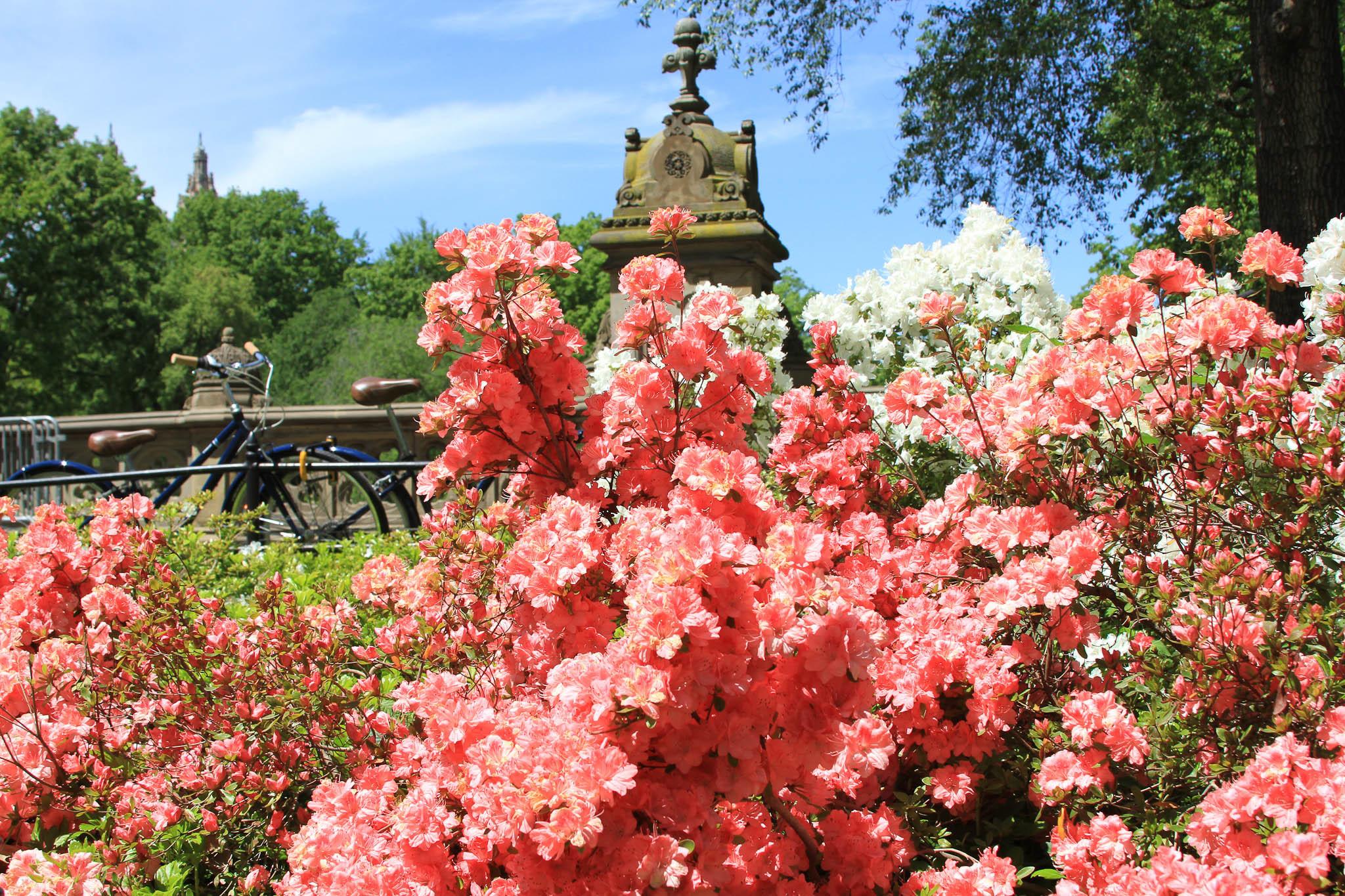 Ten ways to make spring awesome