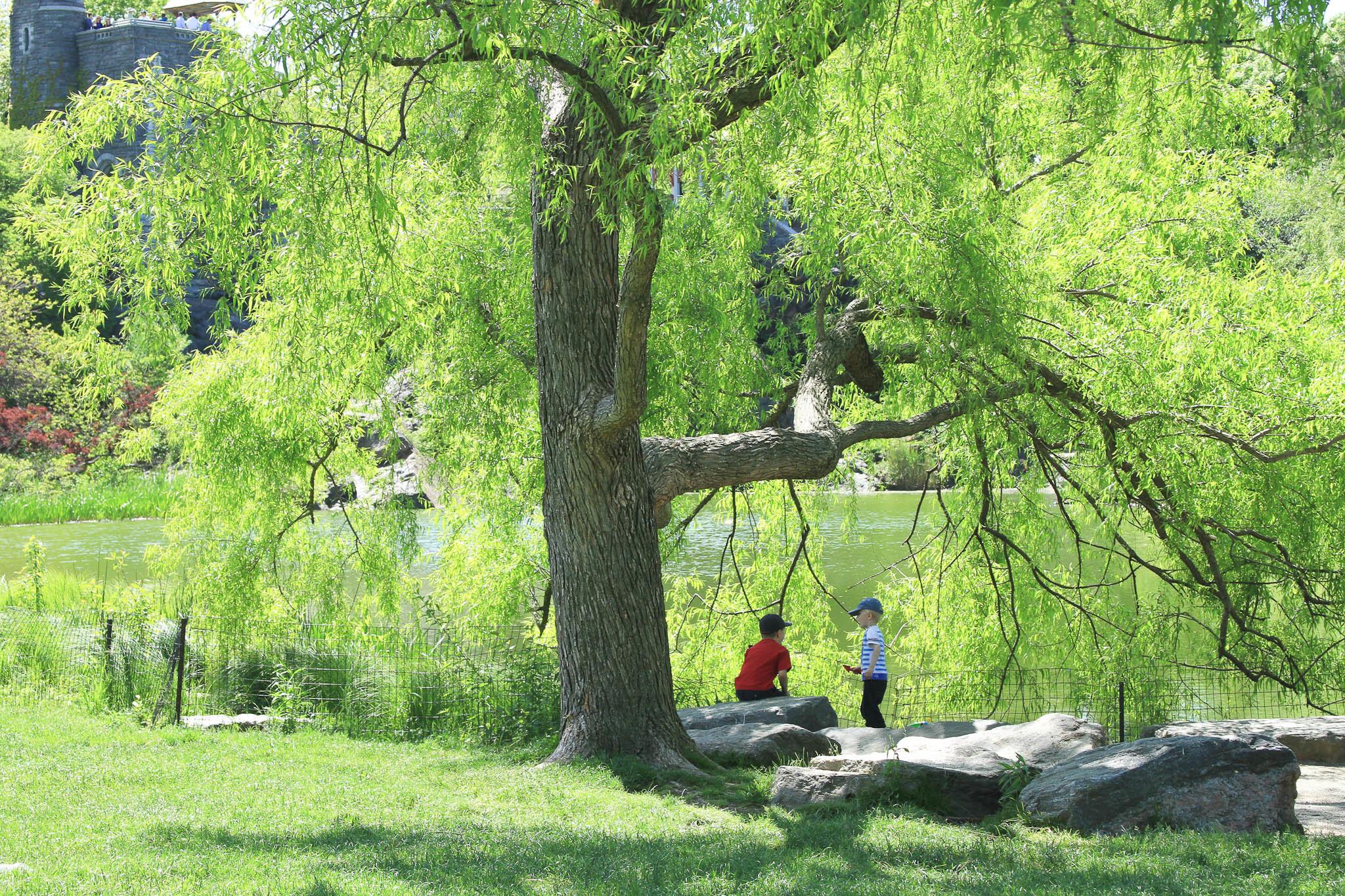 Central Park in New York, spring 2013