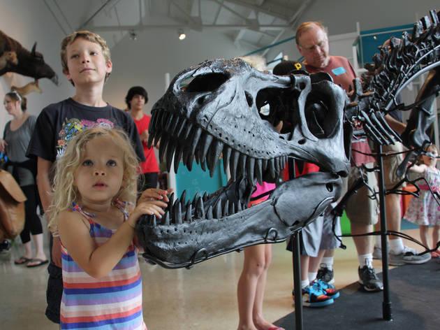 Natural History Museum 100th Birthday Bash