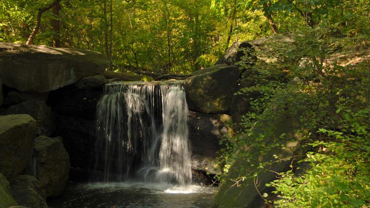 Photograph: The Central Park Conservancy