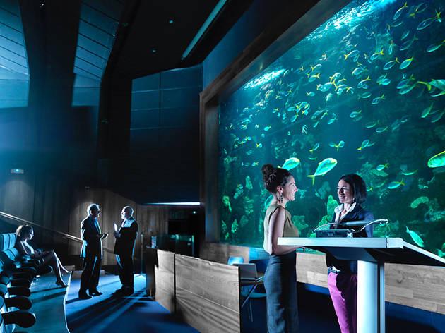 Aquarium (Donosti)