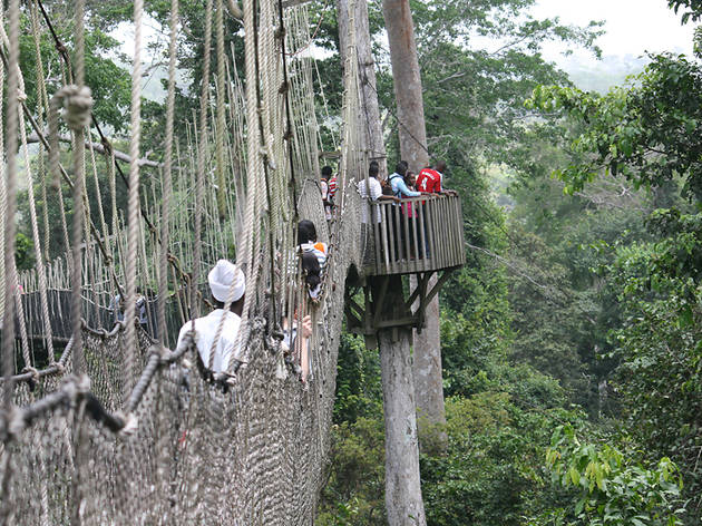 Don't miss: Kakum National Park