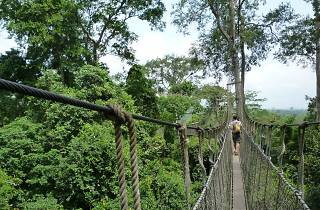 Canopy walkway at Kakum National Park, Ghana