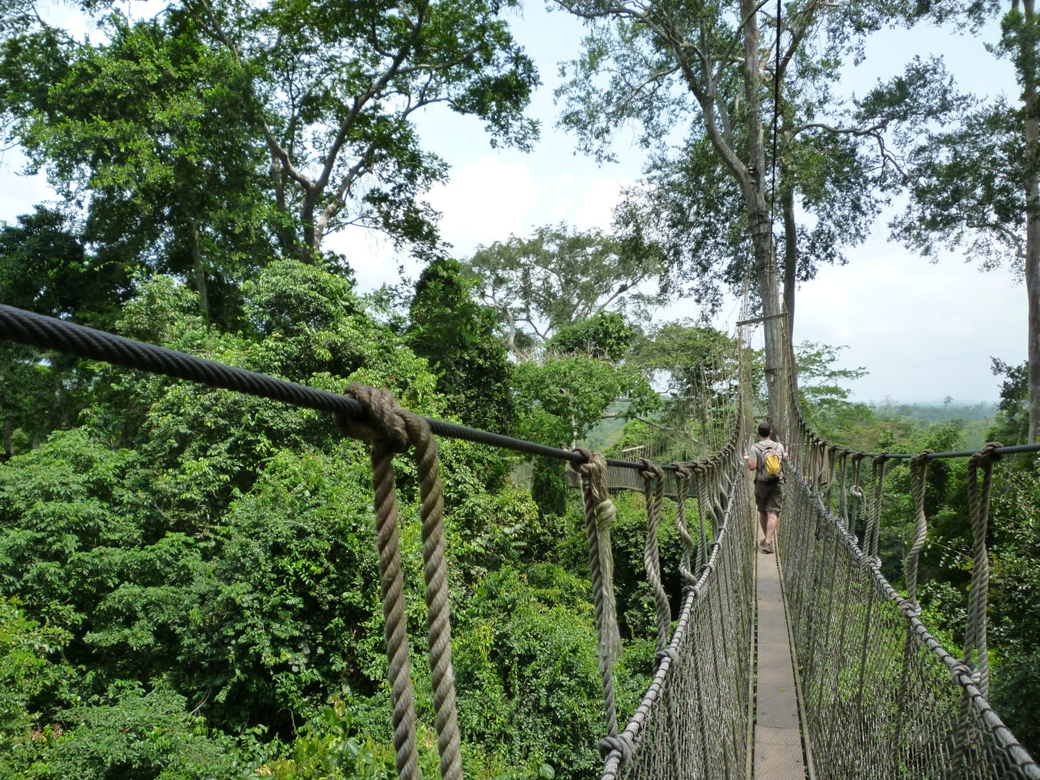 Canopy views of Kakum National Park