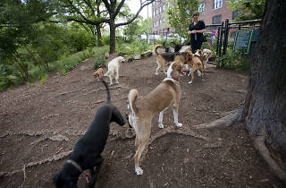 dog park; dogs; parks; hillside dog park