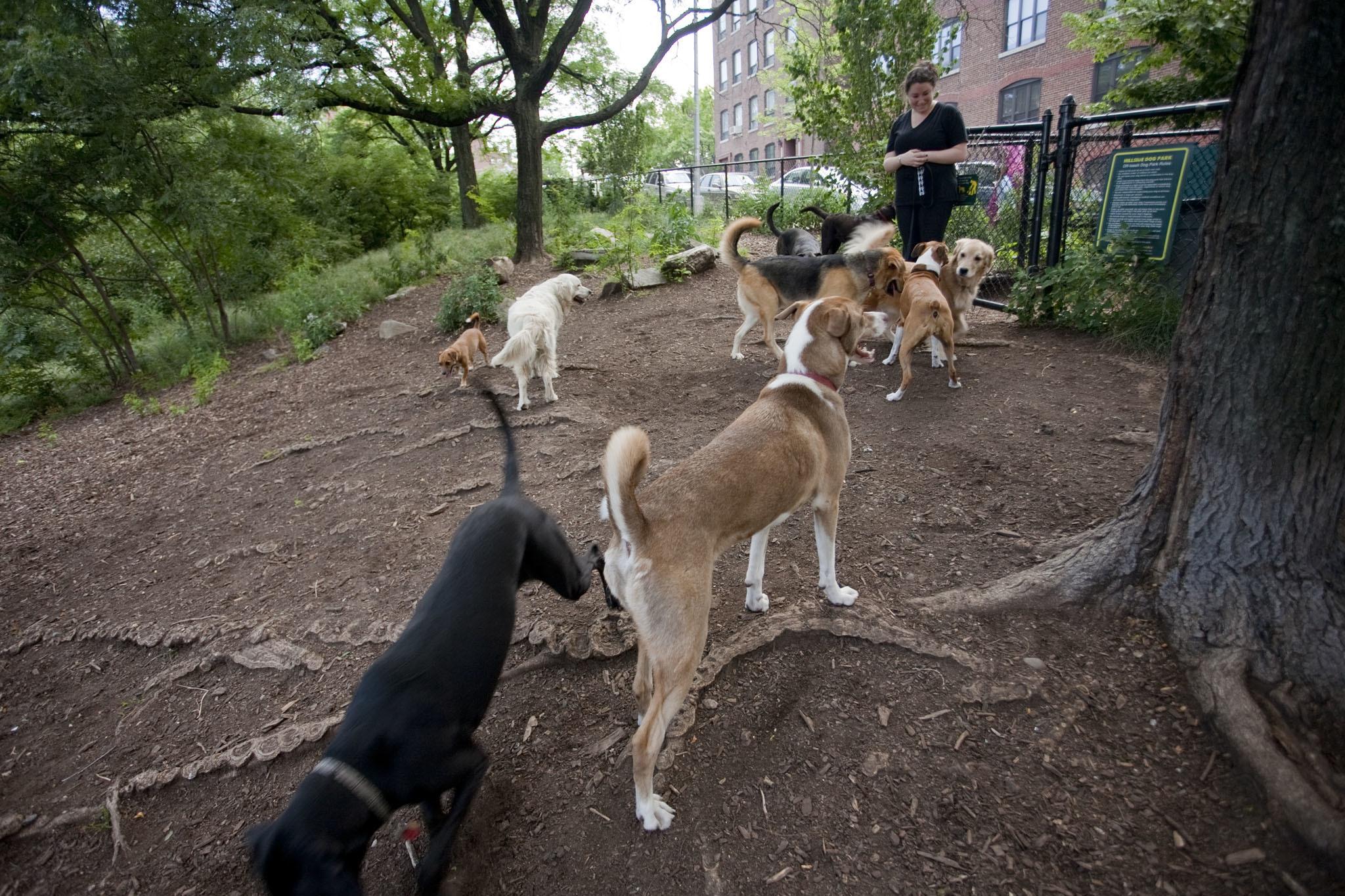 dog park; dogs; parks; hillside dog park