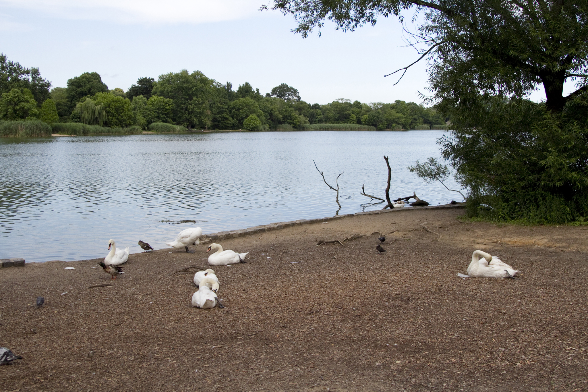 1883, 1895: Suicides by the lake, Prospect Park