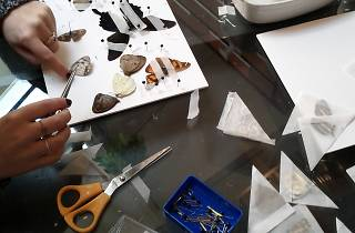Butterfly Preservation and Mounting Workshop