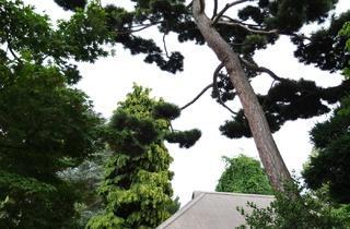 (Musée Albert Kahn, vue des jardins / © TB - Time Out)