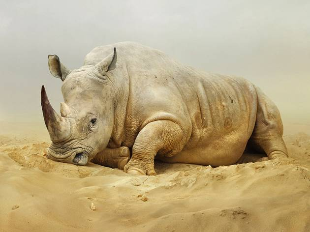 "Simen Johan, ""Until the Kingdom Comes"""