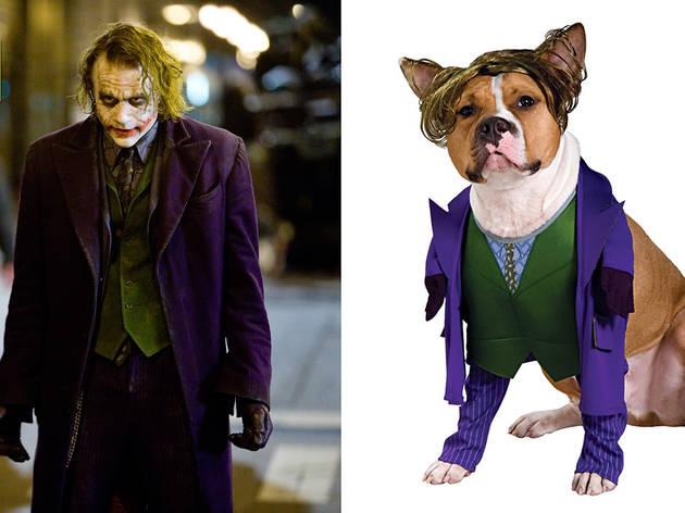 The Joker dog costume