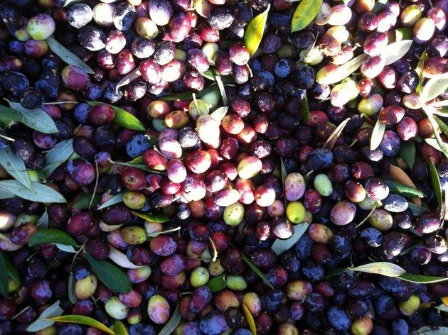 For fresh-pressed olive oil: Ojai Olive Oil Company