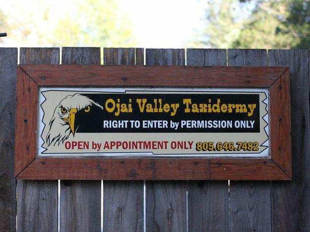 For Ojai's best celeb: Ojai Valley Taxidermy