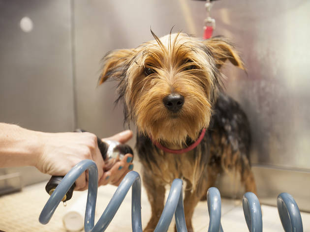 London S Best Dog Groomers Shopping And Lifestyle Time Out London