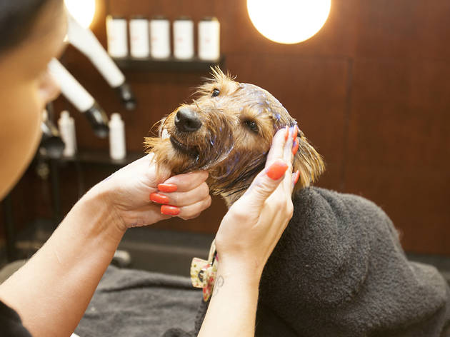 The Pet Spa at Harrods