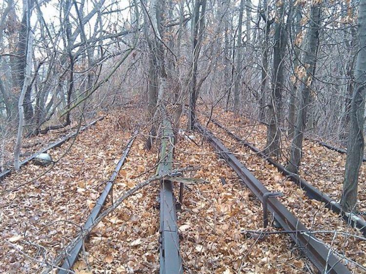 Hike around Forest Park