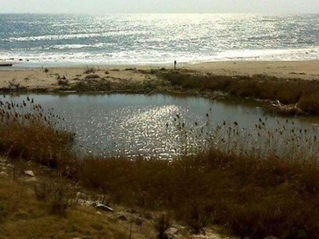 Dunes Llobregat