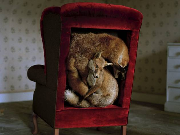 Miss Pokeno ('Trophy Chair', 2009)
