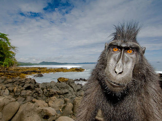 Natural World: Meet the Monkeys