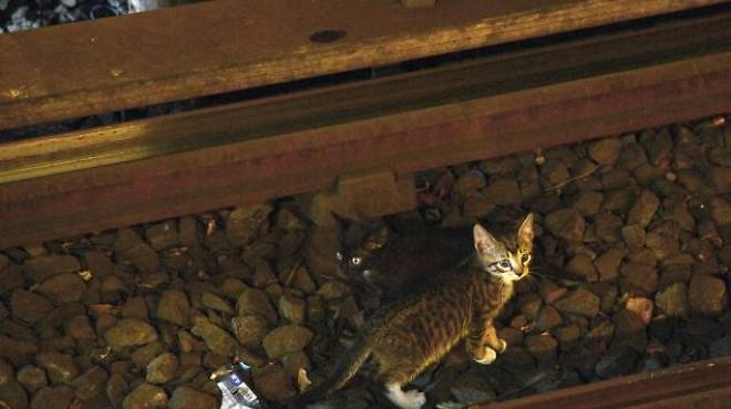 The infamous subway kittens.