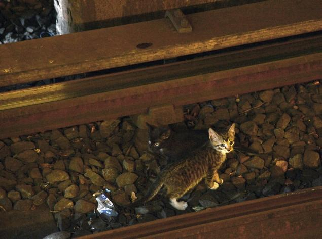 The subway-kitten saga continues: August and Arthur on The Colbert Report