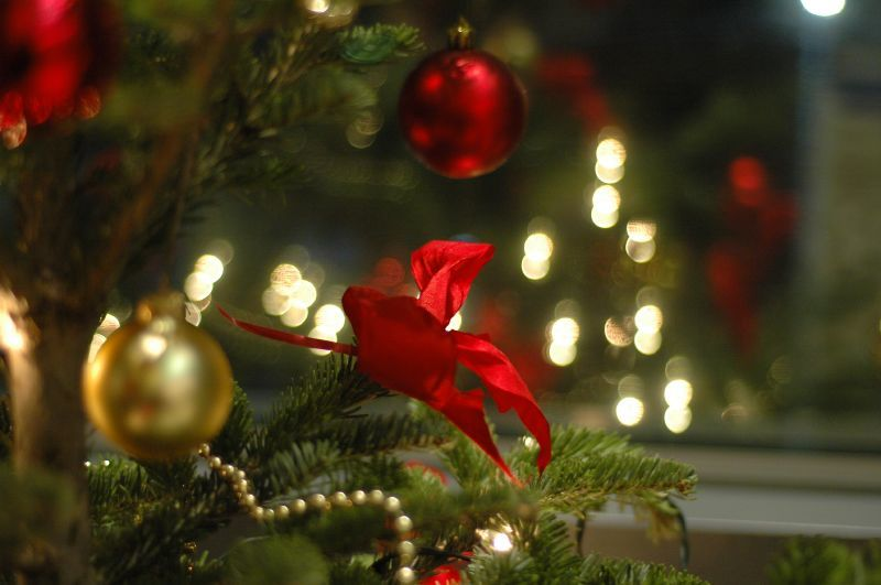 Where to buy a Christmas tree