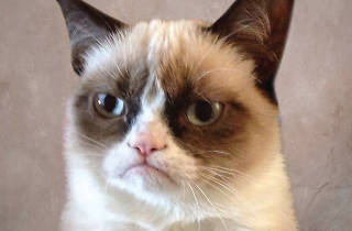 Grumpy Cat: The Grumpy Guide to Life