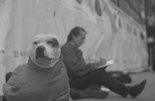 John Dolan: George The Dog, John The Artist