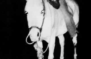 Lutz Bacher (The White Horse, 1981)