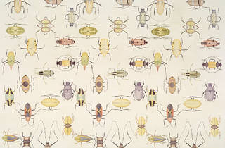 """""""Notched Bodies: Insects and Contemporary Art"""""""