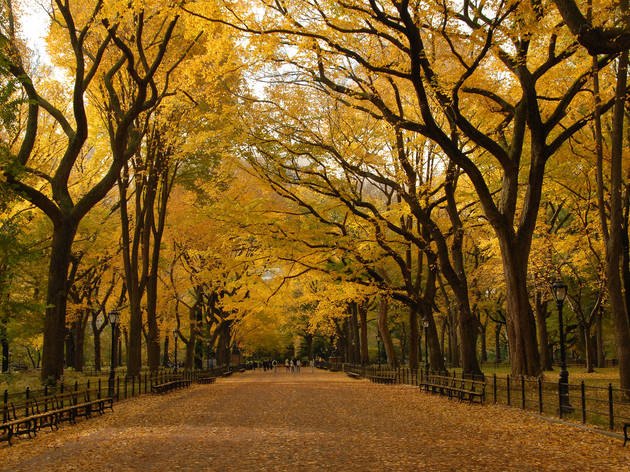 Where to see fall foliage