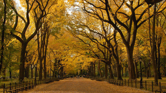 hook up spots in central park The central park conservancy released a list of the best spots to see foliage in the park as it hits its peak sign up for the rag extra, extra.
