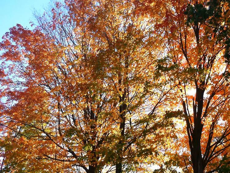 Bloomingdale Park