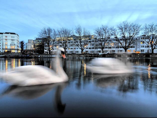 Runner up: 'Swans'