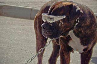 'Disco dog'