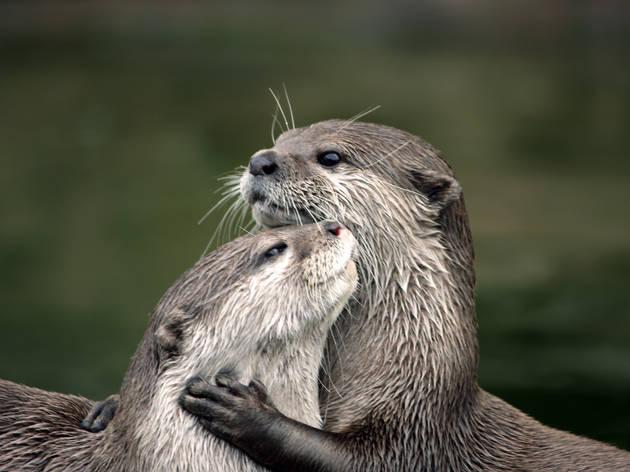 'Otter cuddle'