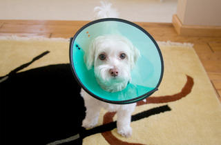 'Cone of shame.'