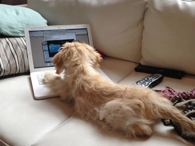'Blog dog'