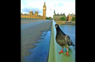 'Good morning, London!'