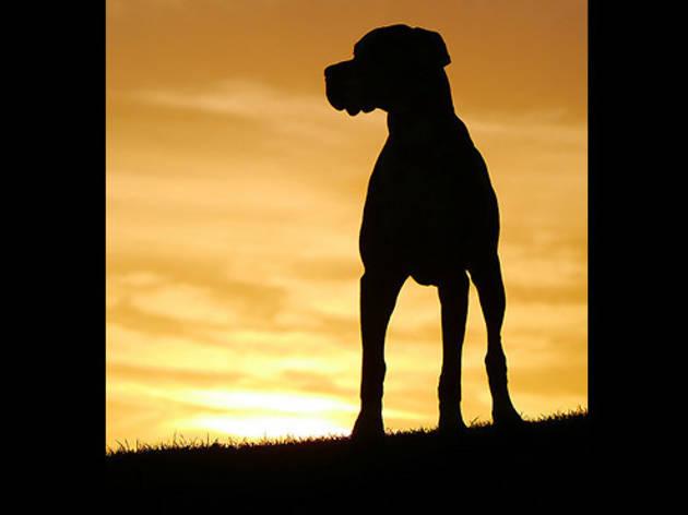 'Boxer sunset'