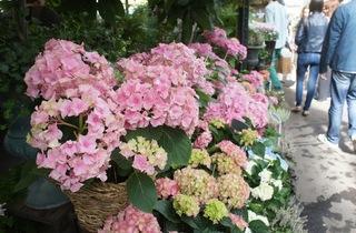Marché aux fleurs  (© Barbara Chossis)