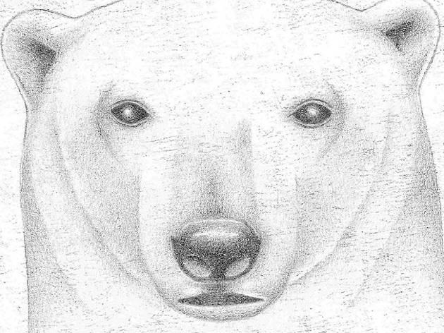 El dibuixant d'óssos