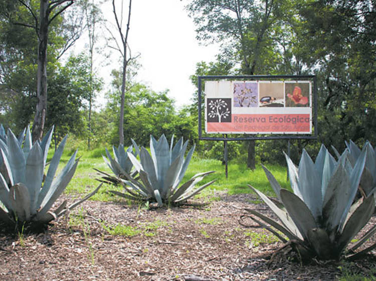 Reserva Ecológica del Pedregal de San Ángel