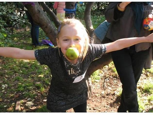 Hackney City Farm Apple Day